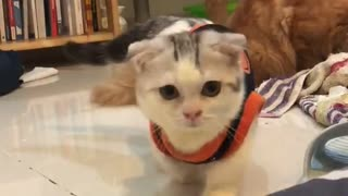 playing with cat  - Video