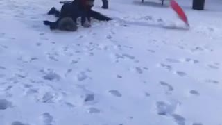 Slowmo kid on sled being pulled gets scorpioned  - Video