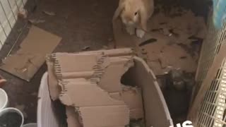 What a glorious morning video of brown rabbit inside destroyed cage - Video