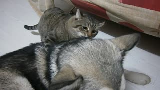 Cat and Dog Cuddling - Video