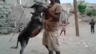 Check this Donkey Dance!! - Video