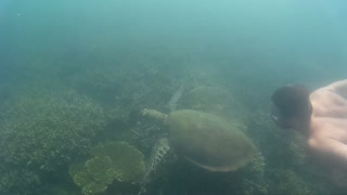 Swimming with turtles in the Great Barrier Reef - Video