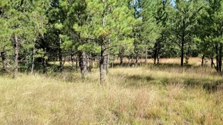 Our property in the Black Hills of South Dakota
