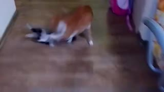 Cats fight 2 - Video