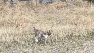 Cat jumps spontaneously  - Video