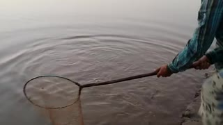 A nice style of fish hunting  - Video