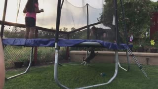 Pup tries to play catch from underneath trampoline