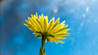 Yellow blooming flower.