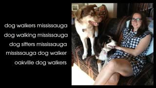 dog sitters mississauga - Video