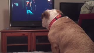 A dog watches a horror movie, but what he does during a scary scene is unbelievable!