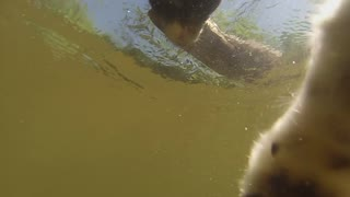 GoPro Border Collie Doggie Paddle