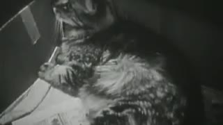 The Best Trial Film About Cats ! - Video