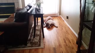 How NOT to be persuasive with your dog... - Video