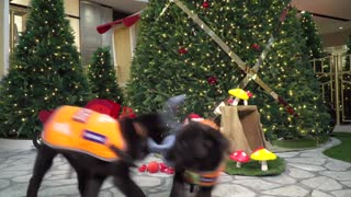 Guide dogs victoria christmas 2020 hero