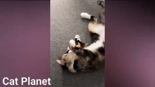 Funny and Cute Cat video