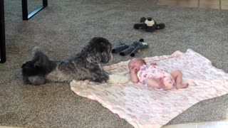 Puppy looks over newborn baby sister - Video