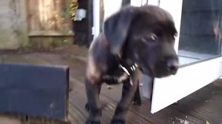 Puppy takes his first look outside