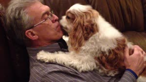 Excited dog loves to welcome owner home - Video
