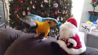 Funny pets getting festive - Video