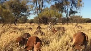 Safety in Kangaroo Numbers - Video