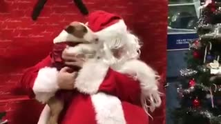 Dog Can't Contain Excitement When Meeting Santa