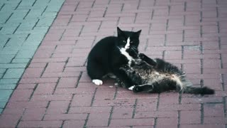 two cats have fun playing.