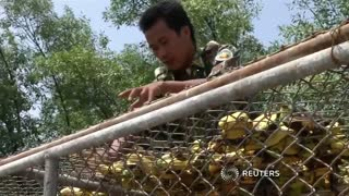 Monkeys relocated to Thai wildlife area - Video