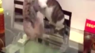 Funny WWE Fight of Cat 2016 - Video
