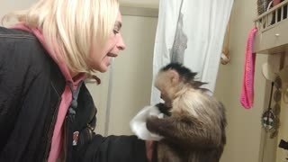 Capuchin monkey gives owner tissue when she sneezes