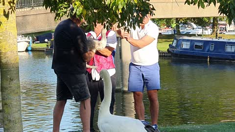 Kind Strangers Rescue Swan from Fishing Wire and Hook Stuck in Its Beak