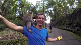 Monkey Forest Ubud Bali Indonesia - Video