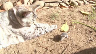 How a cat catches a mouse