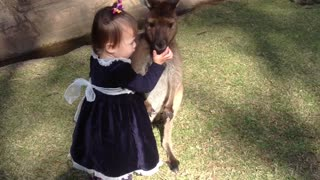 Adorable Two-Year-Old Girl Cuddles And Plays With Baby Kangaroo