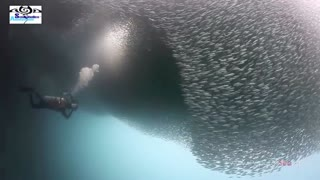 El mayor compilado de buceo en Moalboal, Filipinas - Video