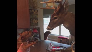 Dog Freaks Out Over Taxidermy Deer - Video