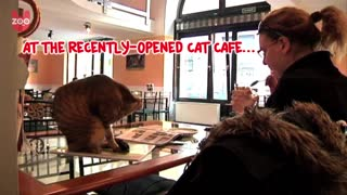 Hungarian Cat Cafe - Video