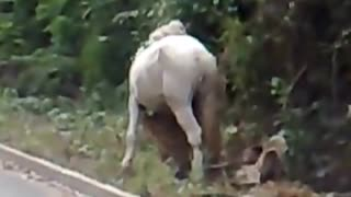 Drunk Man Trying To Climb On The Horse - Video