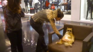 Cool Cat Chills at Mall - Video