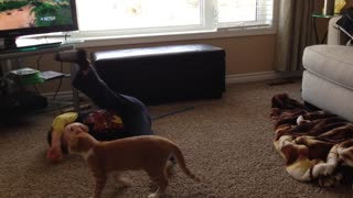 Competitive Cat Ends Slap Fight With Little Boy - Video