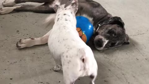 He wants to play but she doesn't feel like it