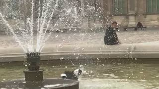 Dog plays in the Louvre Fountain in Paris