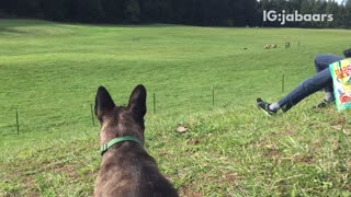 Dog enjoys watching show - Video