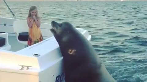 A huge sea lion jumped into the back of the boat. Reason?