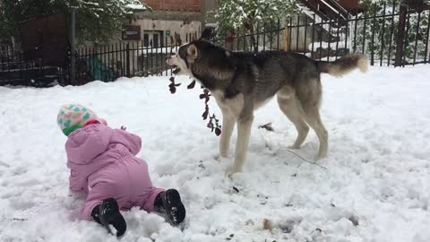 Baby and husky on snow