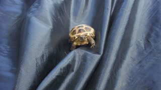 Pet turtle loves to slide down any object