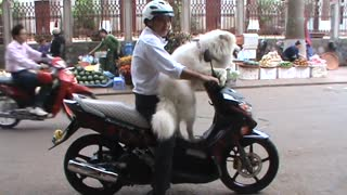 Bid Dog - Dog Riding on Motorcycles and Compilation.