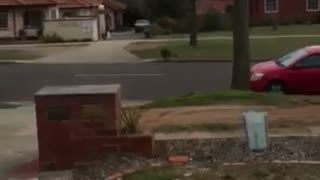 Kangaroo Bounds Down Driveway - Video