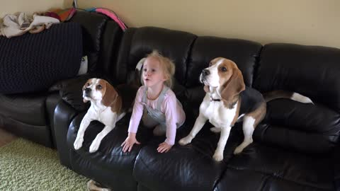 This baby is a part of the beagle pack and she barks for food