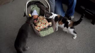 Cats playing new born babies for the first time