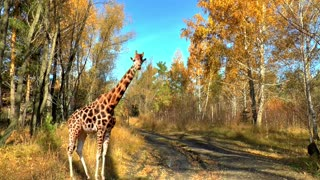 Animals Landscape Nature Life Nature Forest Portrait - Video